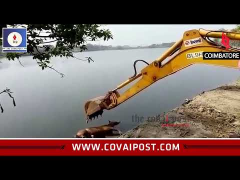 Carcass of abandoned horse found in Ukkadam Lake
