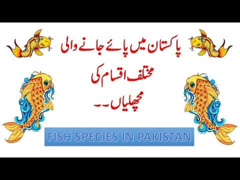 The Main Fishes Of Pakistan: