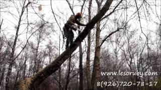 Как спилить дерево по частям на кладбище.(Трёхминутный ролик о том, как спилить не самое простое дерево на обычном кладбище. Вы увидите, что должен..., 2015-11-13T22:19:00.000Z)