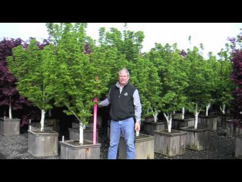 Hall's Garden Center Garden Talk - Iseli Nursery Tour