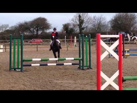 BSJA show jumping 60cm KWPN Gelderlander