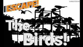 """""""The Birds"""" • BEN WRIGHT • Excellent Production from ESCAPE!"""
