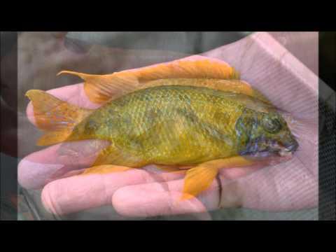 Florida Exotic Fish Sales
