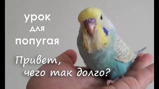 видео урок для попугая