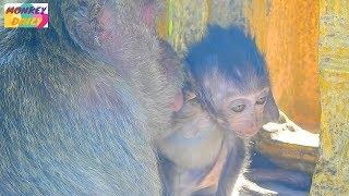 So cute Heidi mom kiss baby by sweetheart | Heidi look better play near mom | Monkey Daily 2102