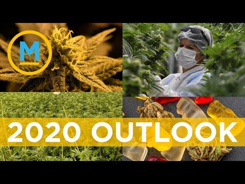 What to expect from the Cannabis industry in 2020   Your Morning
