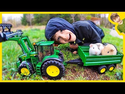 Tractors For Kids Harvesting Hay For Guinea Pigs!