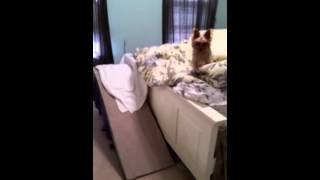 Diy Dog Indoor Ramp