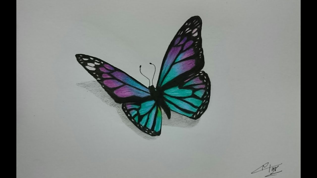 Pencil Drawings: Pencil Drawings Of Butterflies