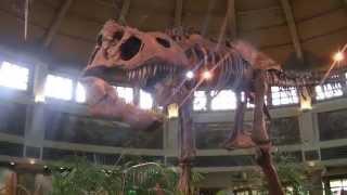 universal studios japan usj japan 2 dinosaur 恐竜 dinozor iskeleti