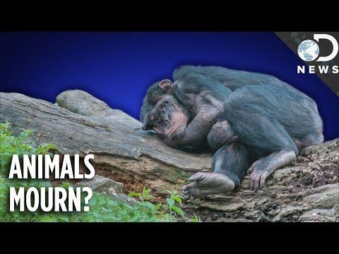 Do Animals Understand Death?