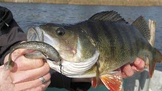 Keitech Easy Shiner. Ловля на джиг. Техасская остастка(Ловля на джиг одна из самых добычливых в спиннинговой рыбалке. Поймать щуку на мелководье и добыть пассивно..., 2014-09-03T12:02:27.000Z)