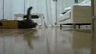 Crazy Sliding Box Cat