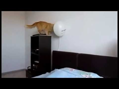 cats-shocked-by-balloon