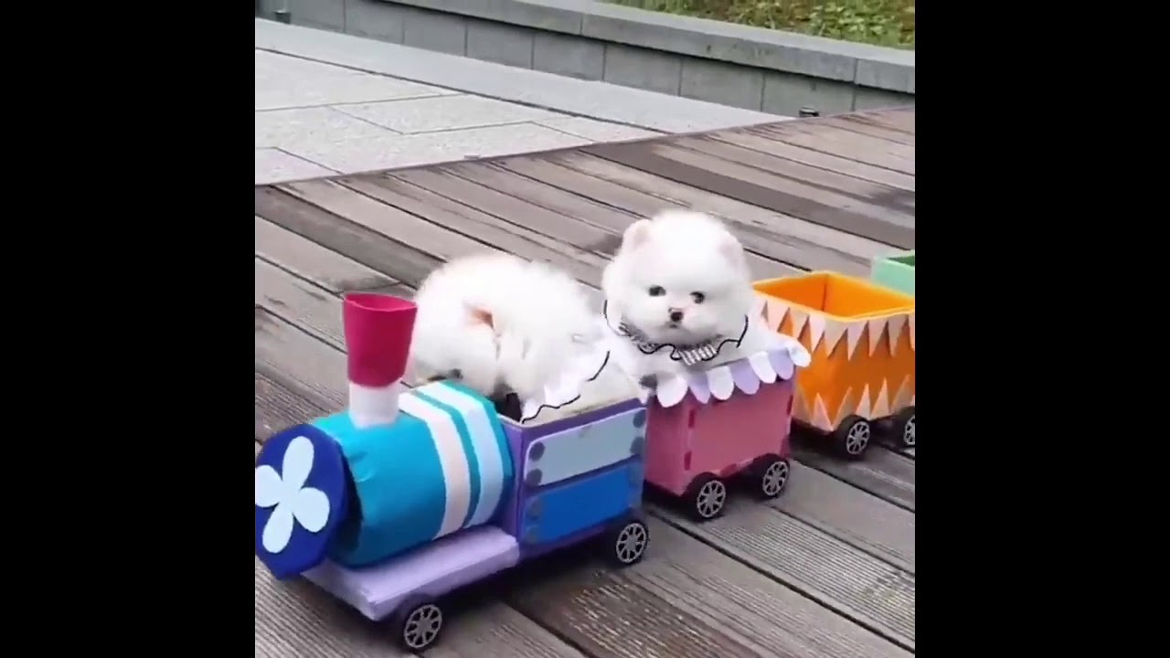 Like Nastya Cute Puppy In Train | Diana Roma Playing With Cute Pomeranian | Mini Pomeranian Fun |
