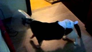 кот после наркоза