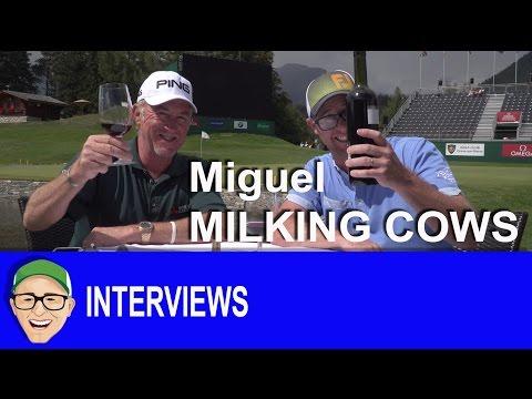 Miguel Ángel Jiménez Milking Cows