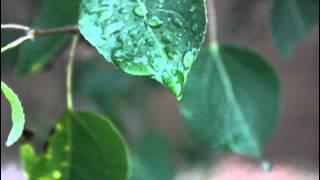 Intro: the Xx + Rain