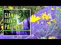 Download El Arca De Noe  - Gian Franco Pagliaro / Discos Fuentes [Audio Oficial] MP3 song and Music Video