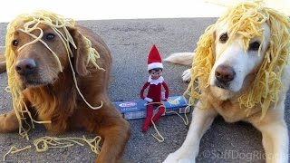 2 Dogs Compete With Elf On The Shelf In Epic Prank War