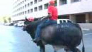The Bull Whisperer - Lyle Brown, Gainesville, FL