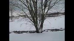 Winterimpressionen - 20.März 2018 - Halle/Saale, Park Heide Süd