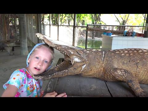 Большой влог Обычная еда для Крокодила кормим живого крокодила Большой слон
