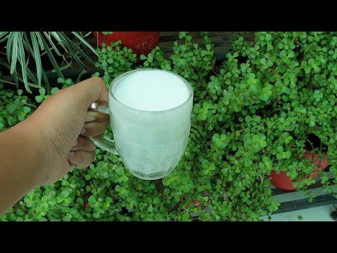 BEST HOMEMADE FERTILIZER + PESTICIDE + FUNGICIDE || ALL IN ONE || Fun Gardening