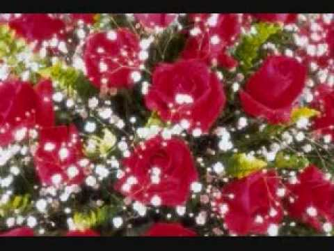 Beautiful Red Rose Wallpapers Youtube