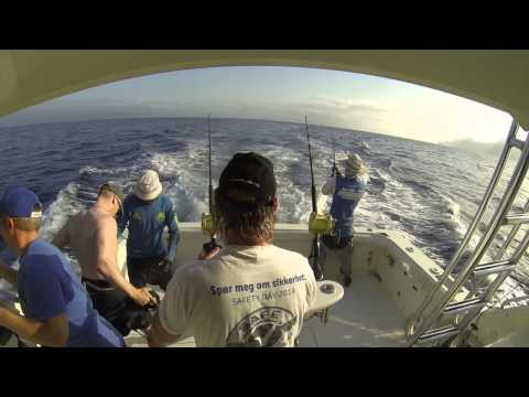 Blue marlin-action, Kapp Verde, april-mai 2014 (fullversjon)
