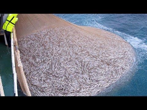 Amazing Big Fishing Catching Skill, Net Fishing In The Sea
