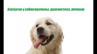 Аллергии У Собак & Как Понять, Что У Собаки Аллергия. Ветклиника Био-Вет