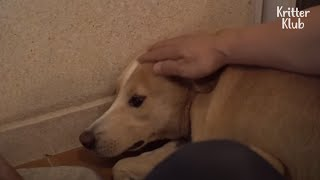 Stray Dog Was Brought Home But Never Allows Anyone To Touch Him (Part 2) | Kritter Klub