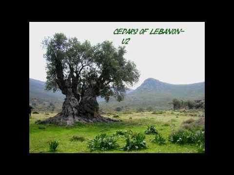 U2 - Cedars of Lebanon