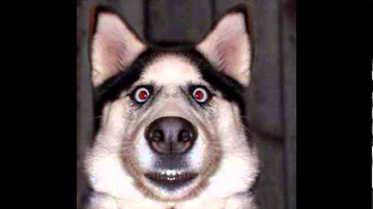 Funny dogs faces pictures youtube funny dogs faces pictures voltagebd Image collections