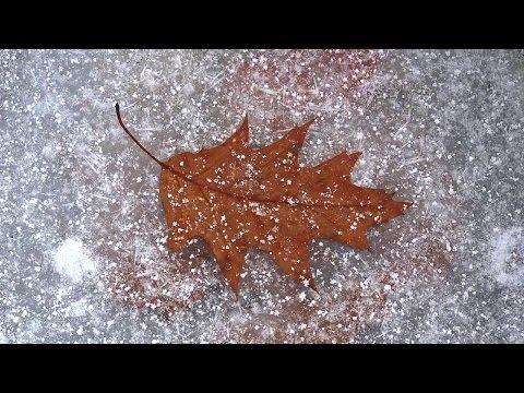 Холодная осень - Игорь Яловец