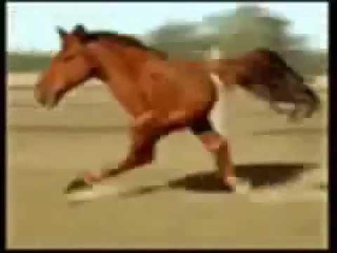 Cavalo galinha