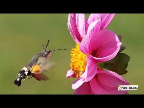 Meditação para Relaxamento Profundo - 3 Virtudes