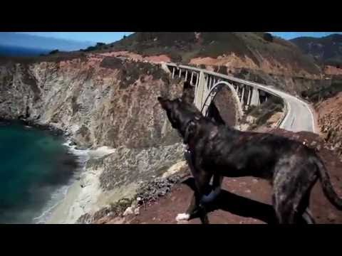 Big Sur with my pup!