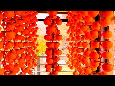 Original Asia Agriculture Fruit Harvesting And Processing Compilation - Asian Dried Persimmon