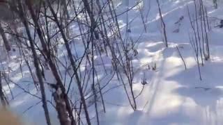 проверка петель на зайца 15.11.16.морозы минус 28