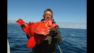 Рыбалка на треску, и северного окуня