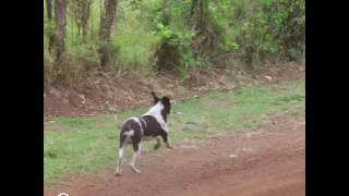 Dog Makes Really Narrow Escape Under Car