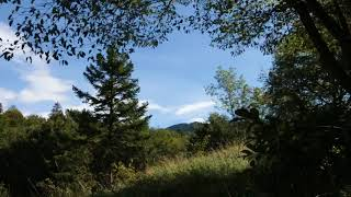 Download Video Relaxing Summer Breeze 1 Hour / Sound of Wind and Leaves Rumbling MP3 3GP MP4