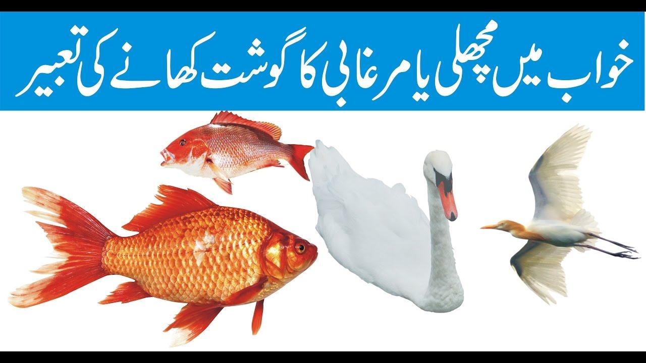 Khawab mein machhli khanay ki tabeer interpretation of for Dream interpretation fish