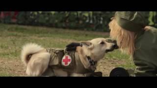 Реконструкция боевых действий с собаками в годы войны