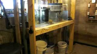 basement sump 6 years ago 75 gallon basement sump with quarantine tank by fbr