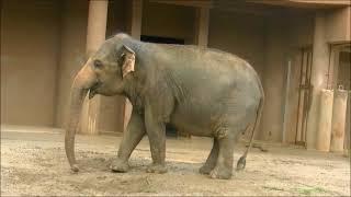動物園には様々な種類の動物がいます。4本足で歩く動物。鼻が長いゾウや...