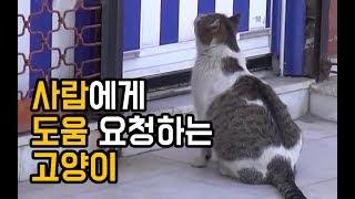사람에게 도움 요청하는 고양이