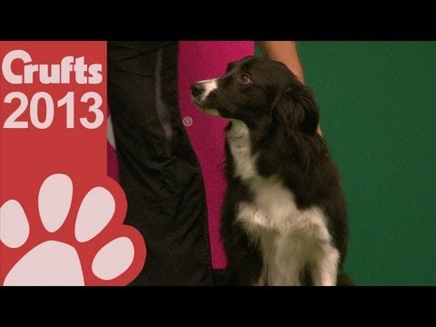 Agility - Winner's Round - International - Jumping - Large - Crufts 2013